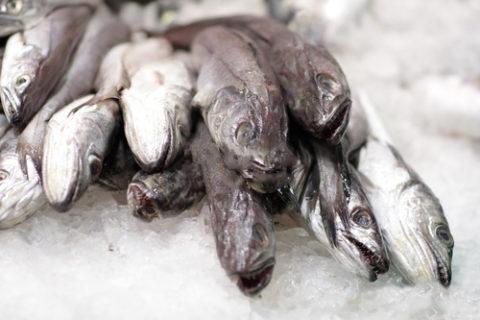 Pesce adriatico