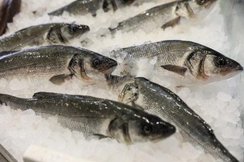 Pesce allevato